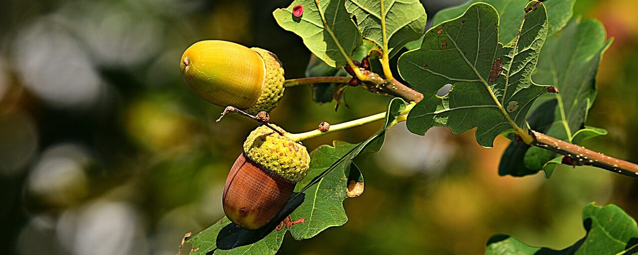 Acorns and Leaves, the hell that I live in.