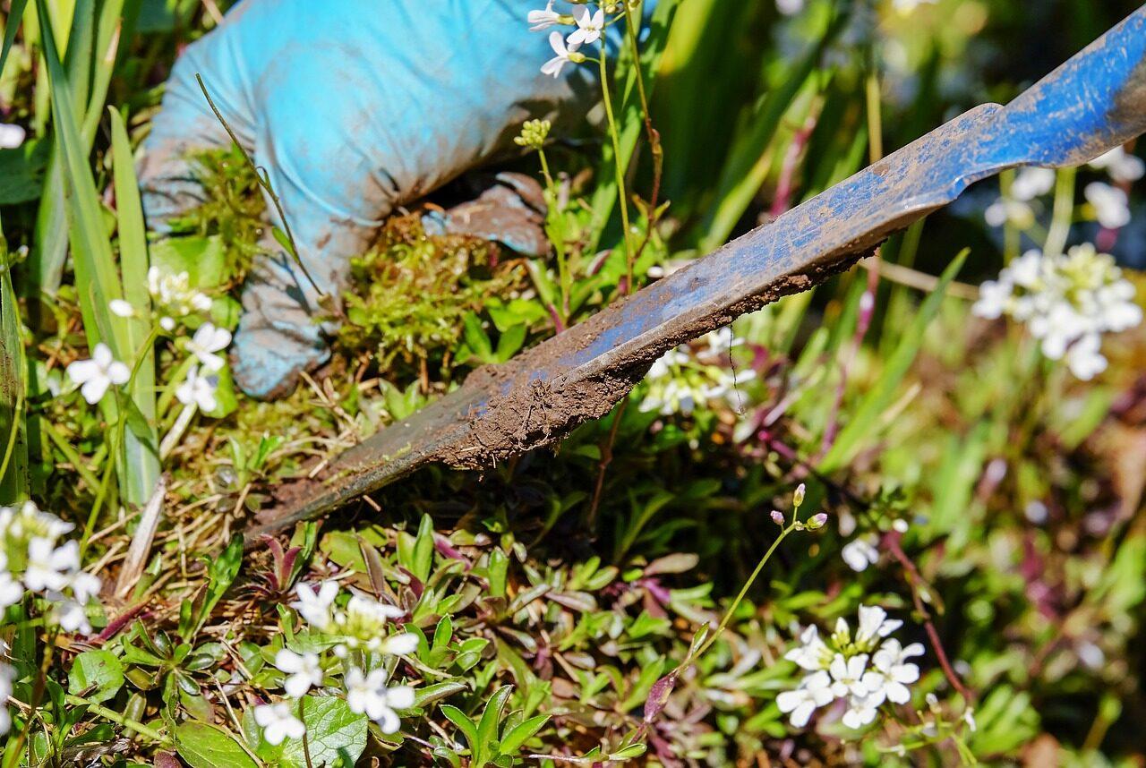 Gardener stabbing beautiful weeds to death